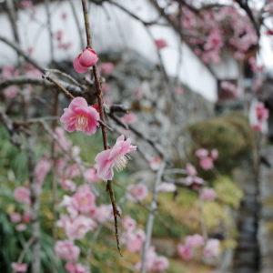 梅、春、古民家
