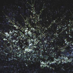 岡山、桜、2019